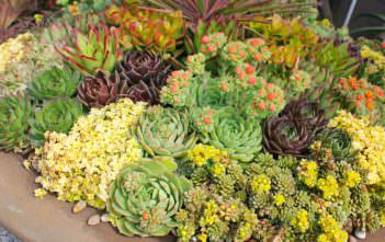 Succulents Success