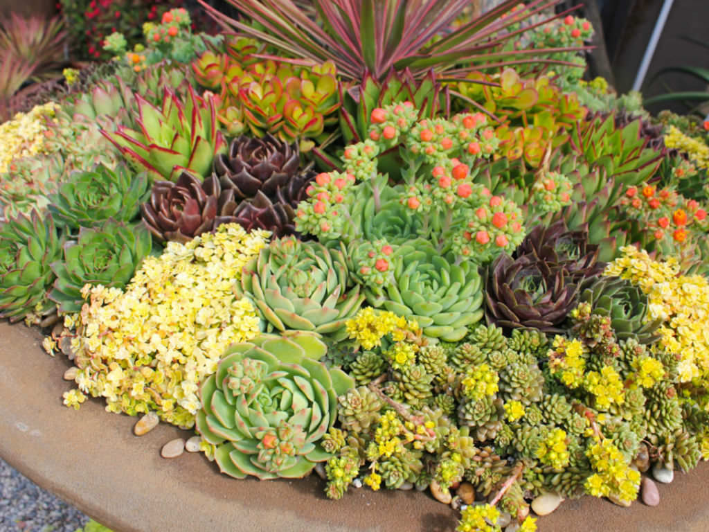3 tips for success with succulents world of succulents for How much sunlight do succulents need