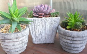 Common Mistakes to Avoid When Growing Succulents