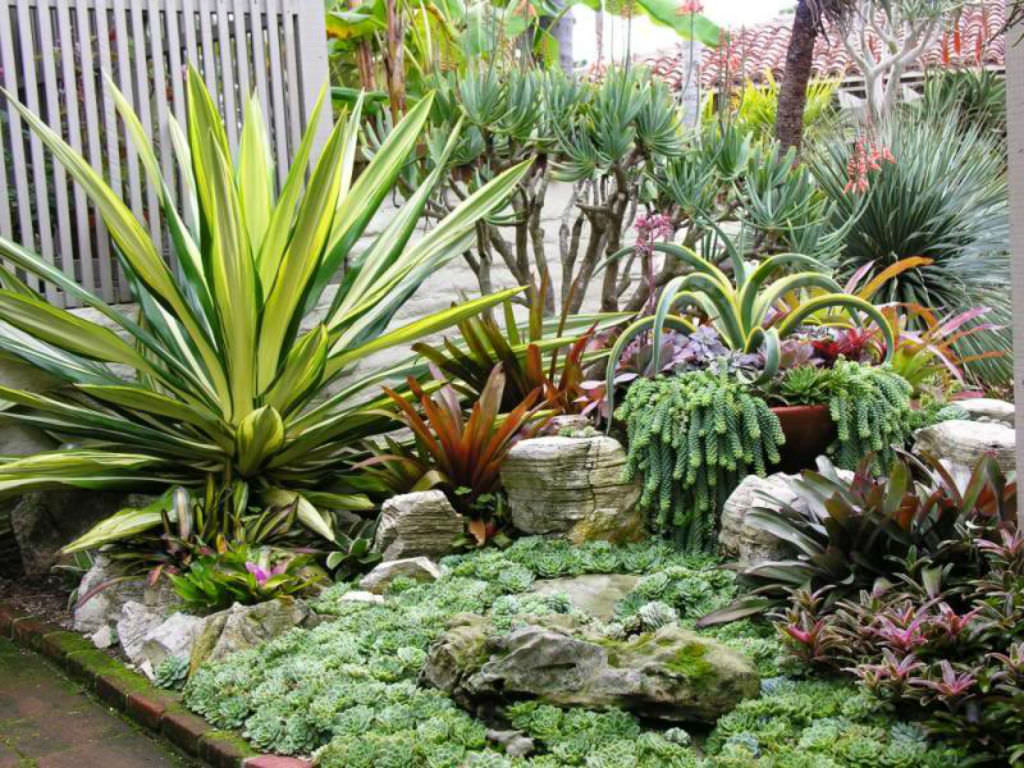 How to grow a succulent garden world of succulents for Jardines con cactus