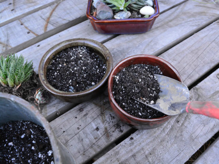 Potting Mixes for Succulent Plants