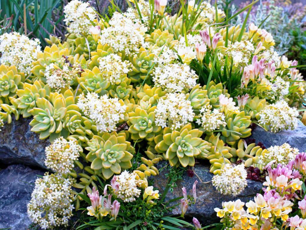 https://www.anniesannuals.com/plants/view/?id=3484