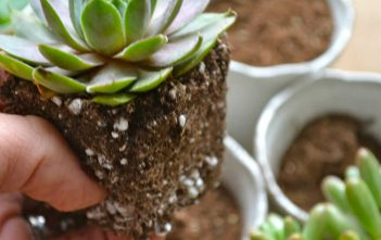 Soil Mix for Succulents