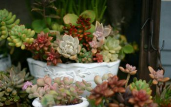 Care Tips for Growing Succulents Indoors During the Winter