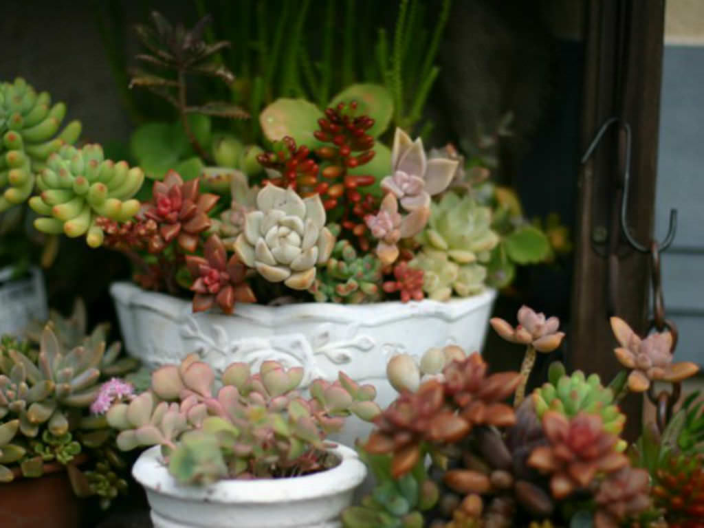 4 Tips For Growing Succulents Indoors During The Winter World Of Succulents