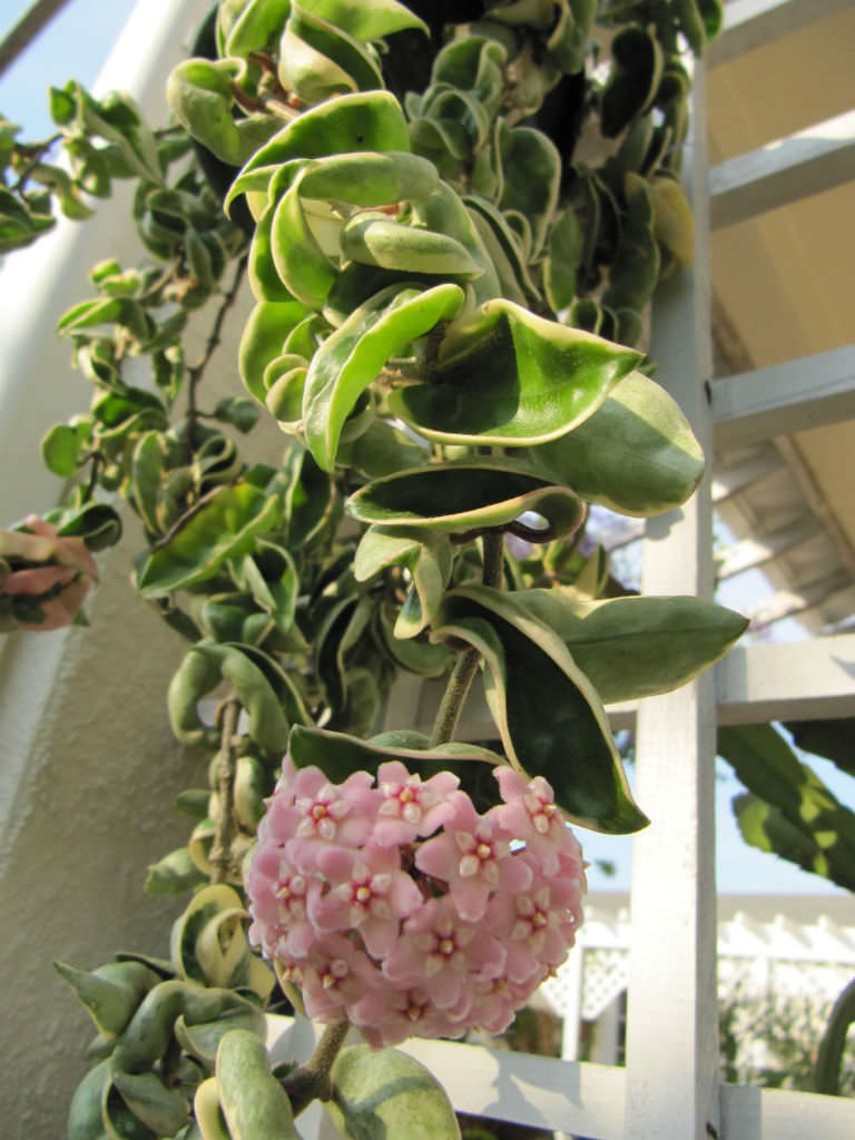 Image Result For How To Start A Garden Indoors