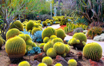 Cactus Facts