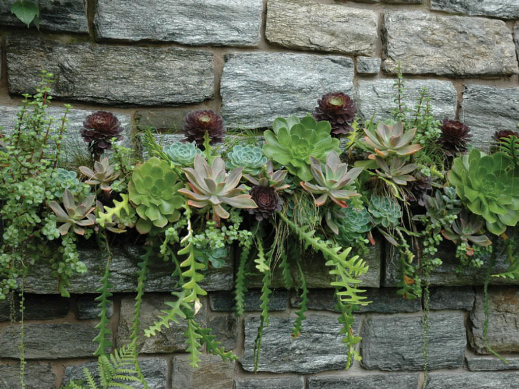10 Secrets For Growing Healthy Succulents Outdoors World Of Succulents