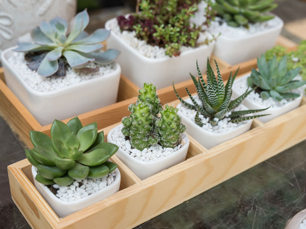 Image result for succulent plants indoor