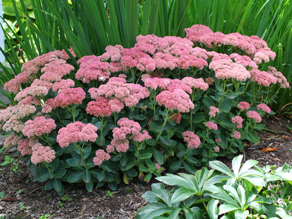 Best Flowers For Partial Shade