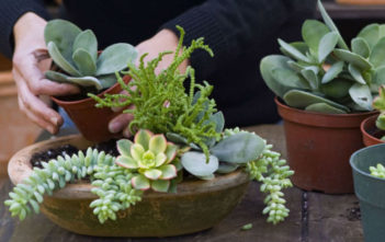 Growing and Caring for Succulents