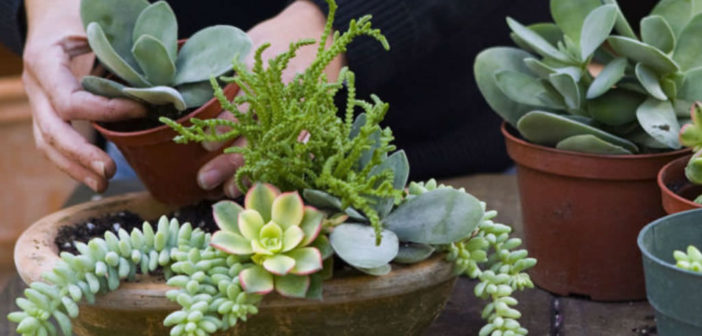 Everything You Need To Know About Growing And Caring For