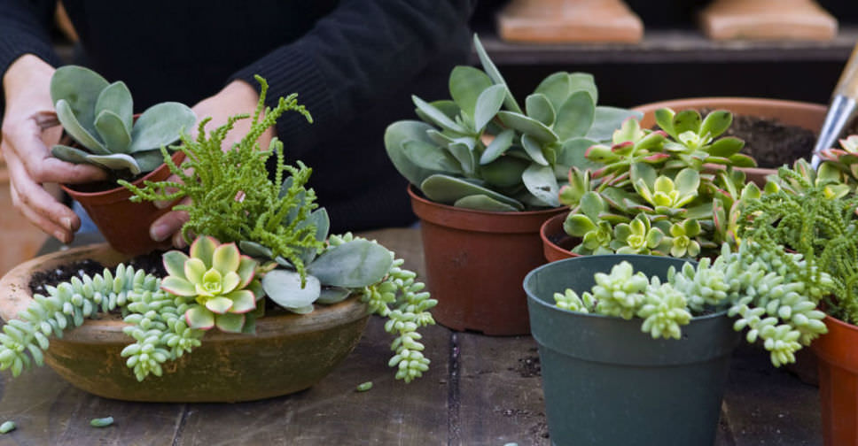 Everything you need to know about growing and caring for succulents world of succulents - Best succulents for indoors ...