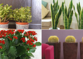 The Most Common Indoor Cacti and Succulents