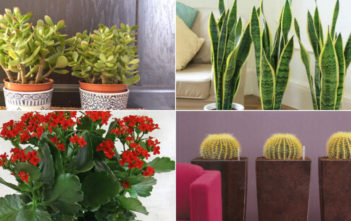 Most Common Indoor Cacti and Succulents
