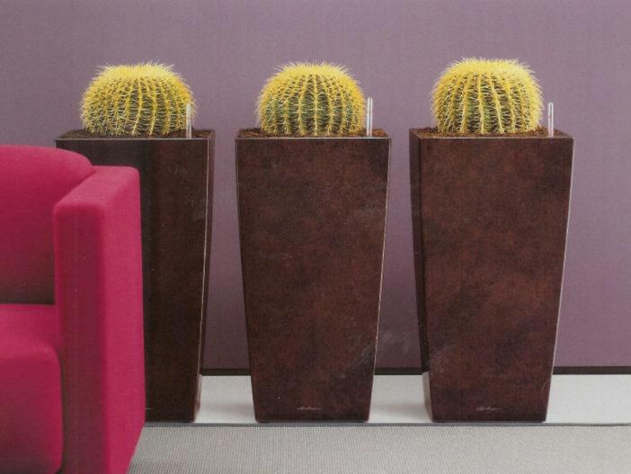 Most Common Indoor Cacti and Succulents (Echinocactus grusonii)