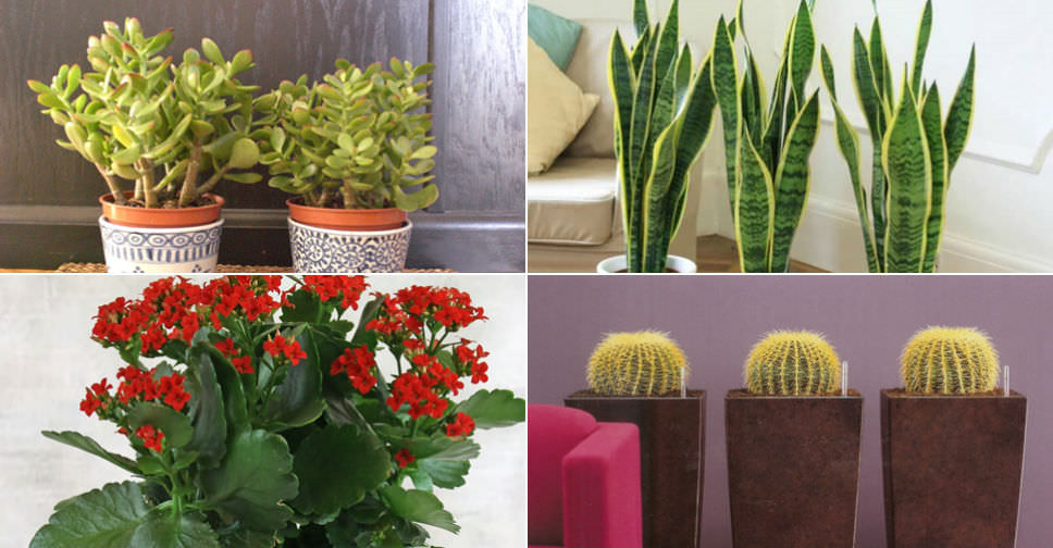 The Most Common Indoor Cacti And Succulents World Of