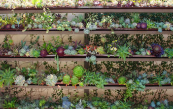 Ultimate Guide to Succulents - Succulent Care