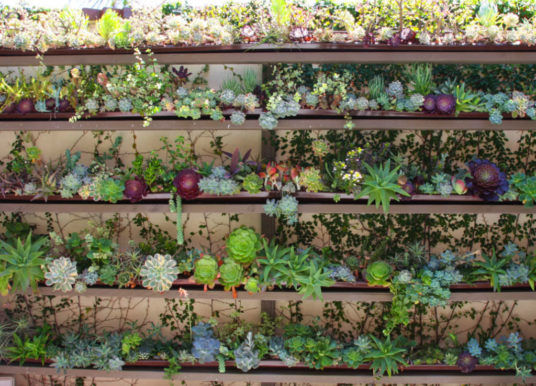 Ultimate Guide to Succulents: Succulent Care