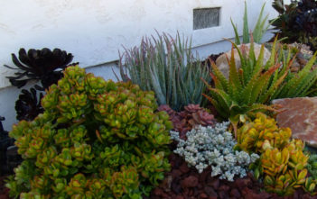Ultimate Guide to Succulents - Types of Succulents