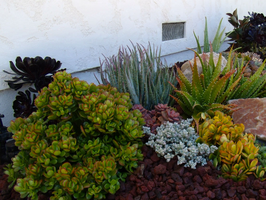 Ultimate Guide To Succulents Types Of Succulents World Of Succulents