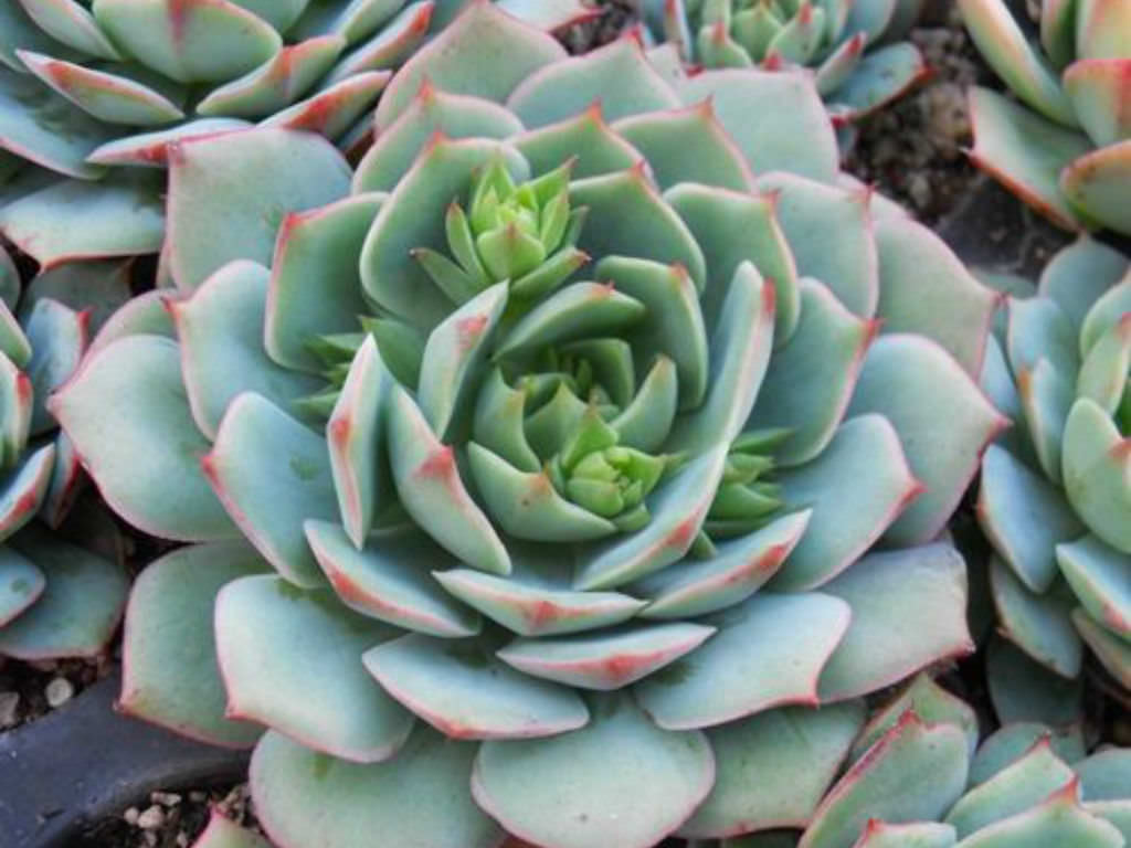 foto How to Propagate Succulent Plant Cuttings