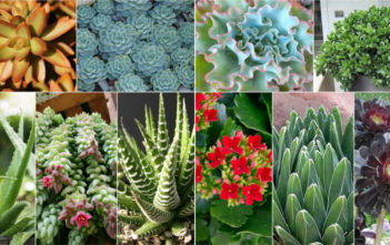10 Stylish Succulents