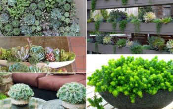Easy-Care Mini Succulent Garden Ideas
