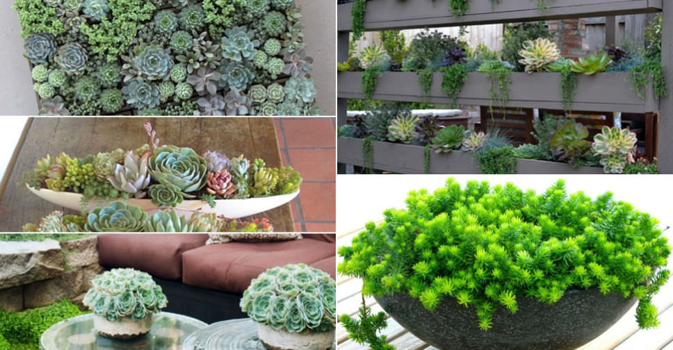 5 easy care mini succulent garden ideas world of succulents for Easy care landscaping ideas