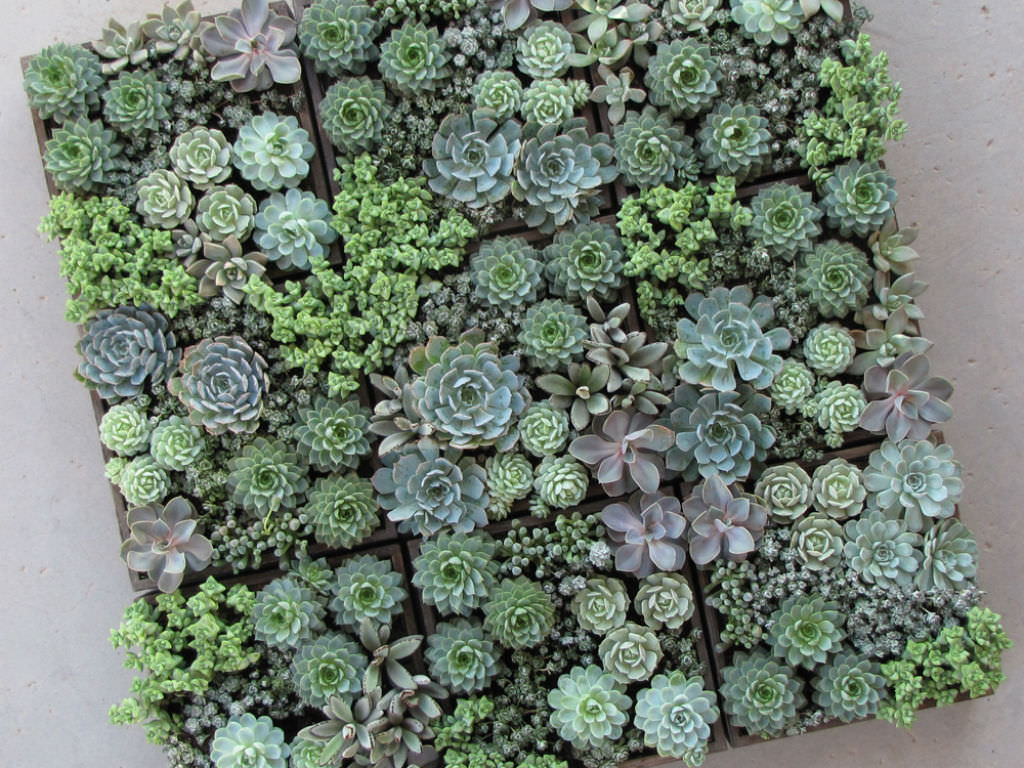 5 easy care mini succulent garden ideas world of succulents. Black Bedroom Furniture Sets. Home Design Ideas