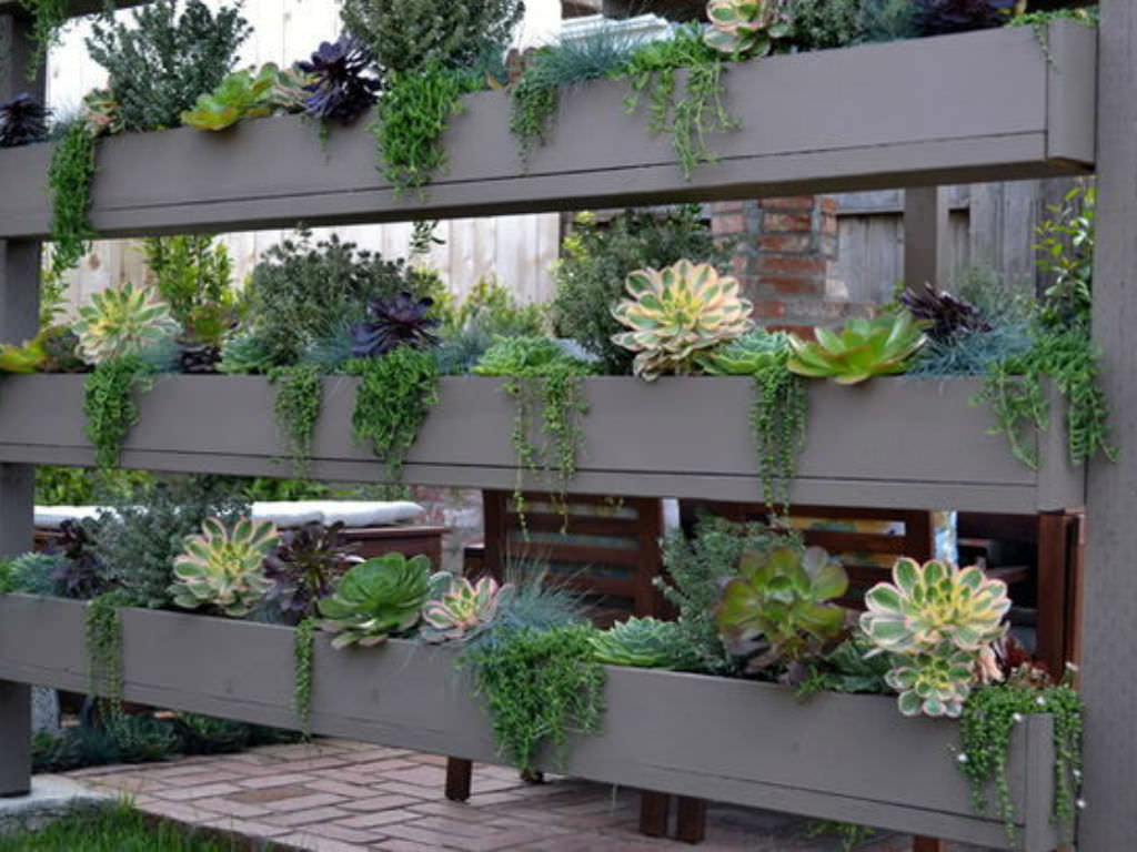 5 easy care mini succulent garden ideas world of succulents for Easy to care for garden designs