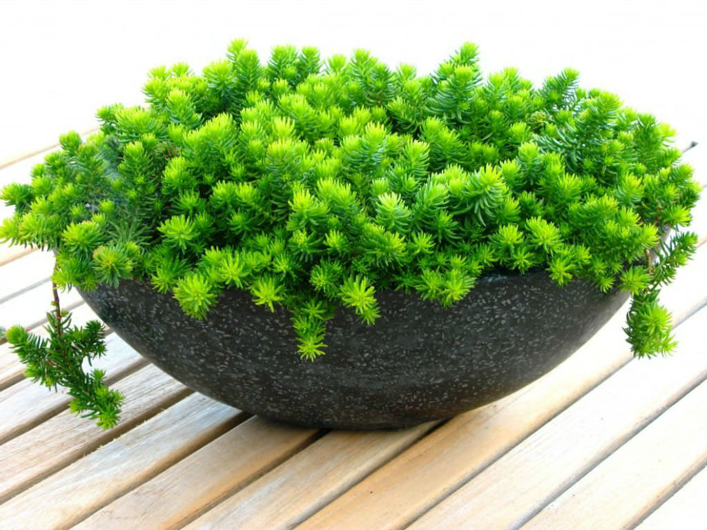 5 easy care mini succulent garden ideas world of succulents for Easy care outdoor plants