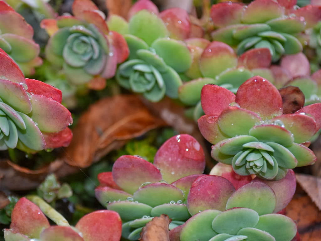 Tips For Succulent Care During The Winter World Of