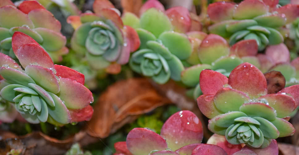 Tips for succulent care during the winter world of for How do you take care of succulents