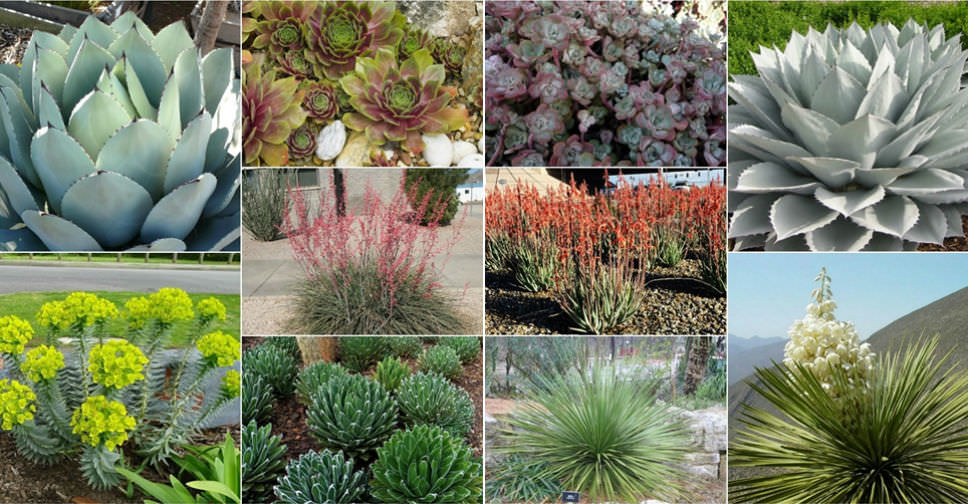 10 Cold Hardy Succulents World Of Succulents