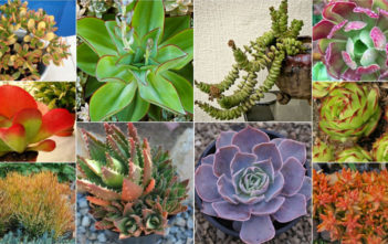 Colorful Succulents Plants