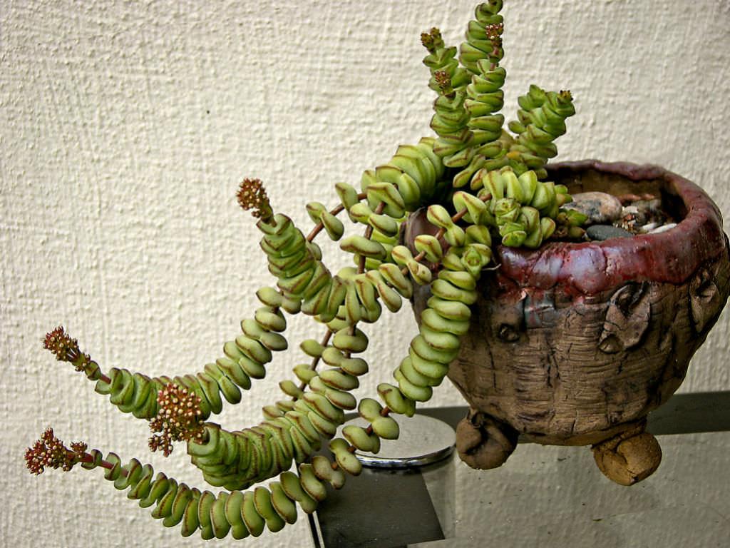 top 10 colorful succulents