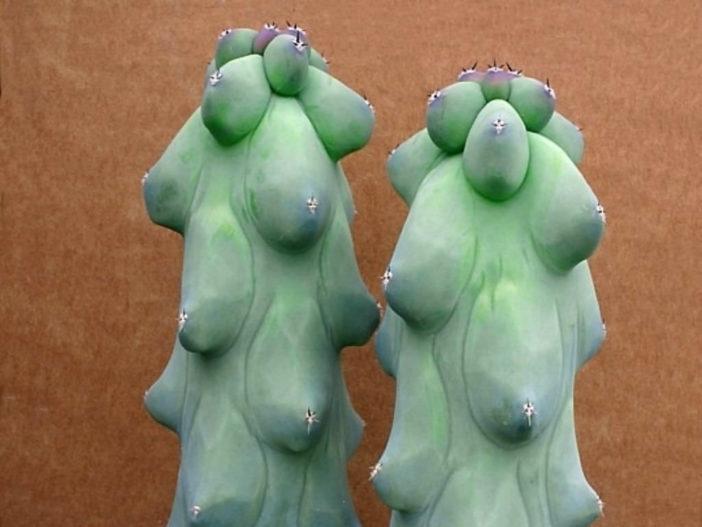 Myrtillocactus geometrizans 'Fukurokuryuzinboku' - Breast Cactus