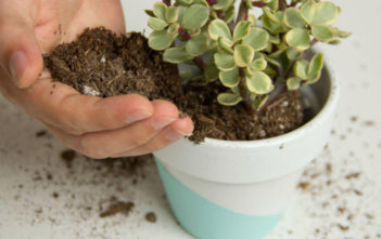 Mix Soil for Succulents