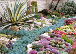 How Succulents Can Solve Your Garden Problems