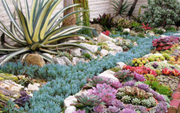 Succulents Can Solve Your Garden Problems