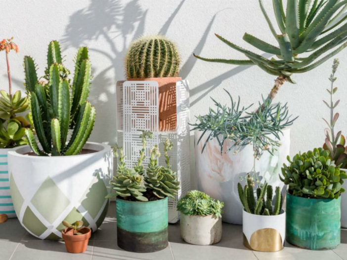 Biggest Mistakes Beginners Make in Trying to Grow Cacti and Succulents