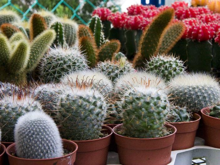 Fix a Wilting Cactus