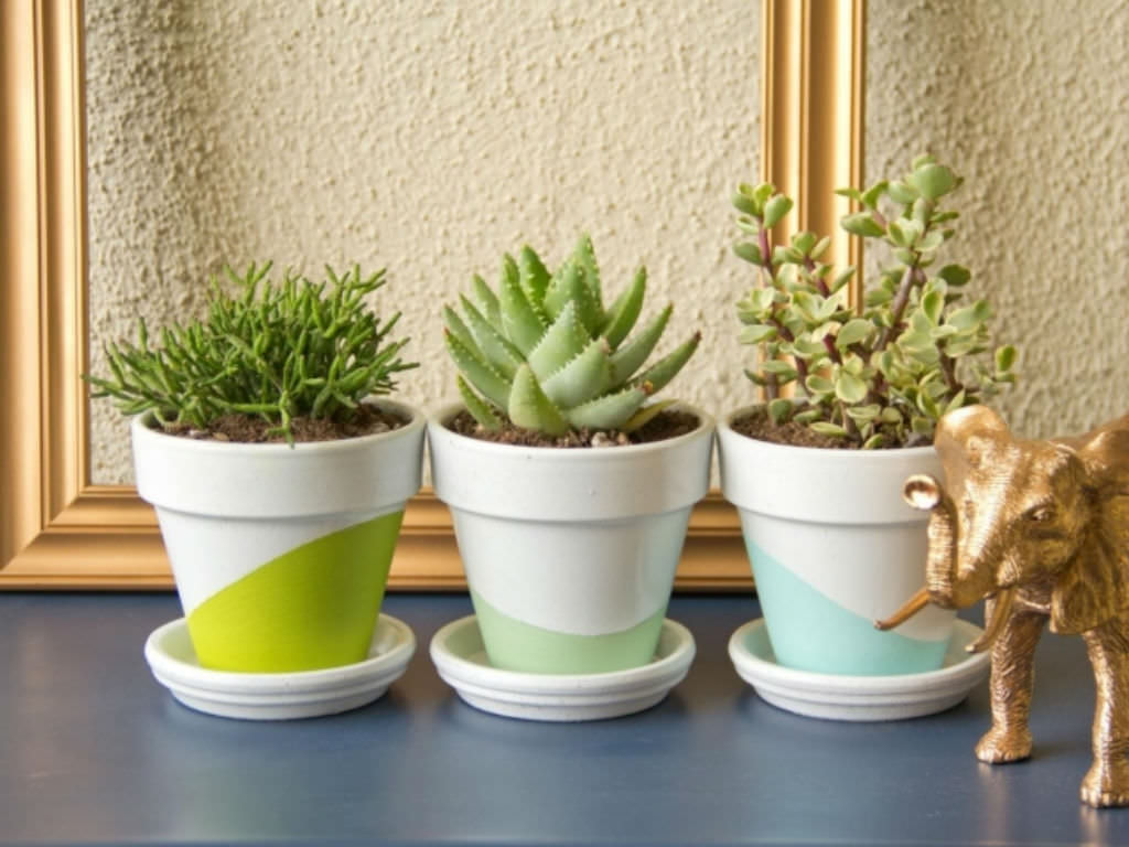 Best Cacti And Succulents For Your Office Desk. Photo Via Avril Paradise.com