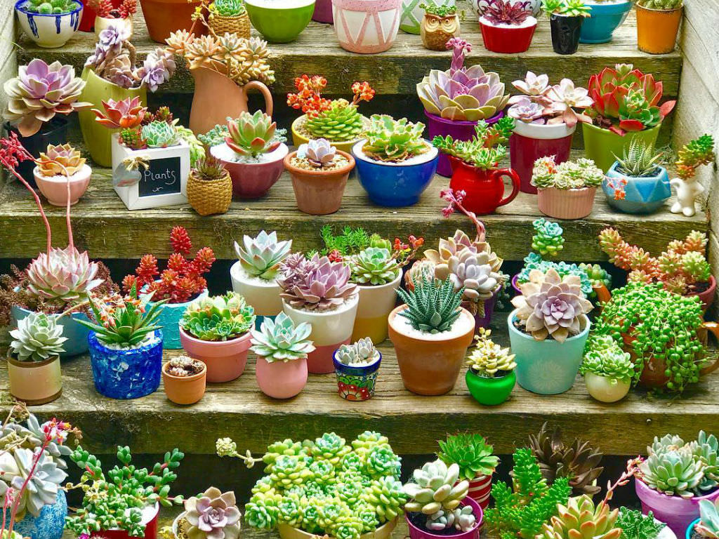 How To Grow And Care For Succulents In Containers World Of Succulents