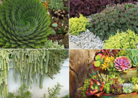 4 Ways to Design with Succulents