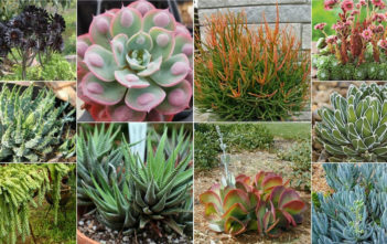 Outstanding Succulents