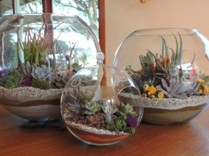 Care Succulent Terrarium
