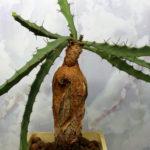 Euphorbia buruana