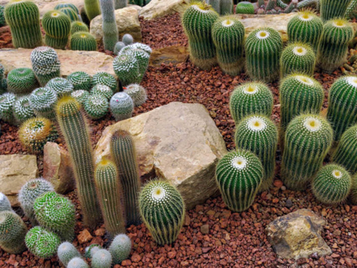 Reasons Your Cacti are Dying